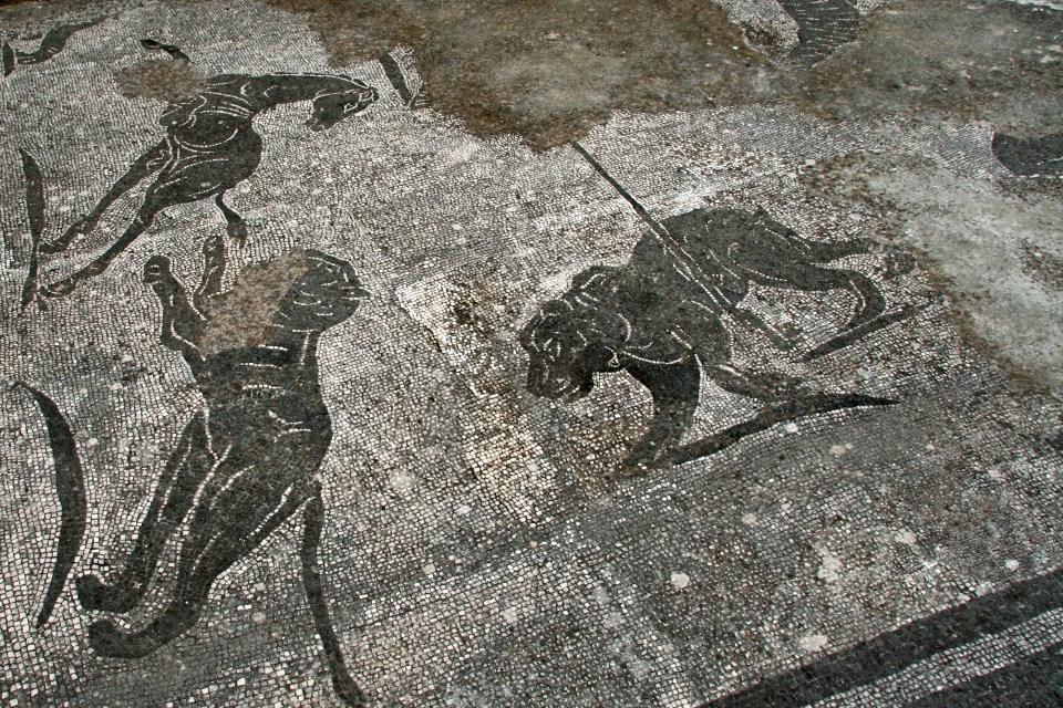 Mosaico del tepidarium delle Terme dei Cisiarii