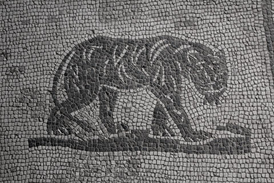 PArticolare del mosaico della stanza E della  Domus della Fortuna Annonaria